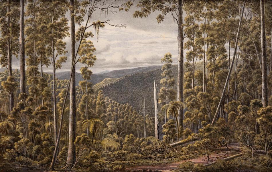 Australian Landscapes - Forest, Cape Otway Ranges (1866)