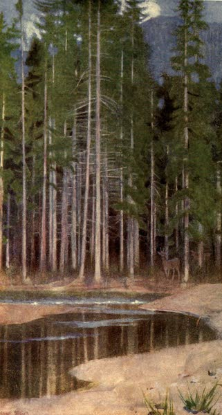 Austria-Hungary by G. E. Mitton - A Pine Forest in the Tatra (1914)