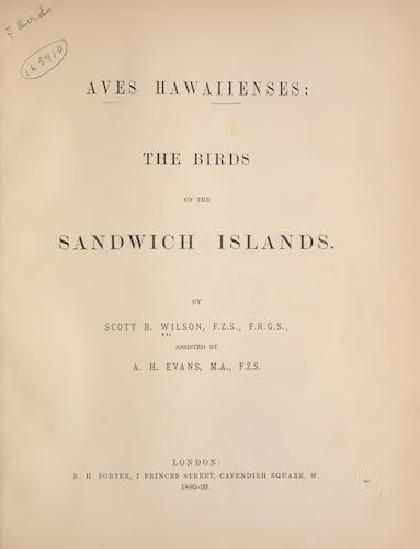 English - Aves Hawaiienses : the Birds of the Sandwich Islands