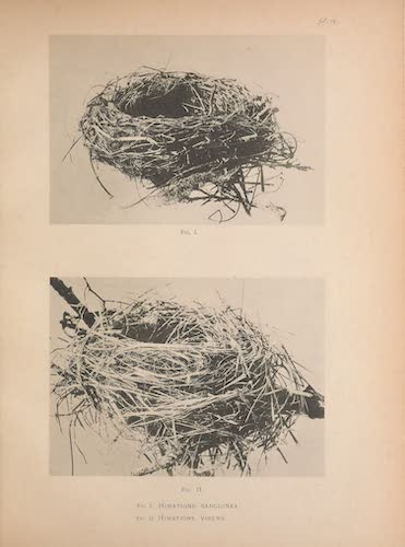 Nests of Himatione sanguinea and H. virens
