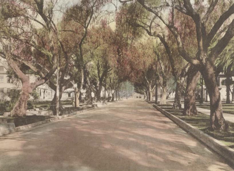 Beautiful Pasadena California - Marengo Avenue (1920)
