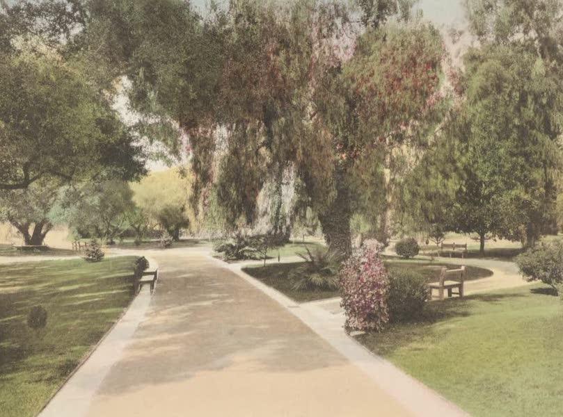 Beautiful Pasadena California - Busch Gardens [II] (1920)