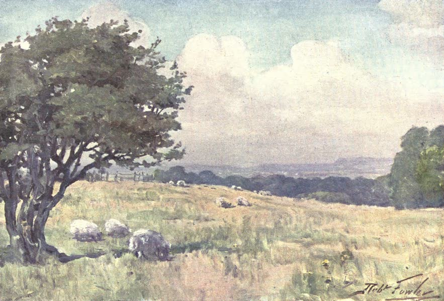 Beautiful Wales Painted and Described - Sunny Field, near Llanberis (1905)