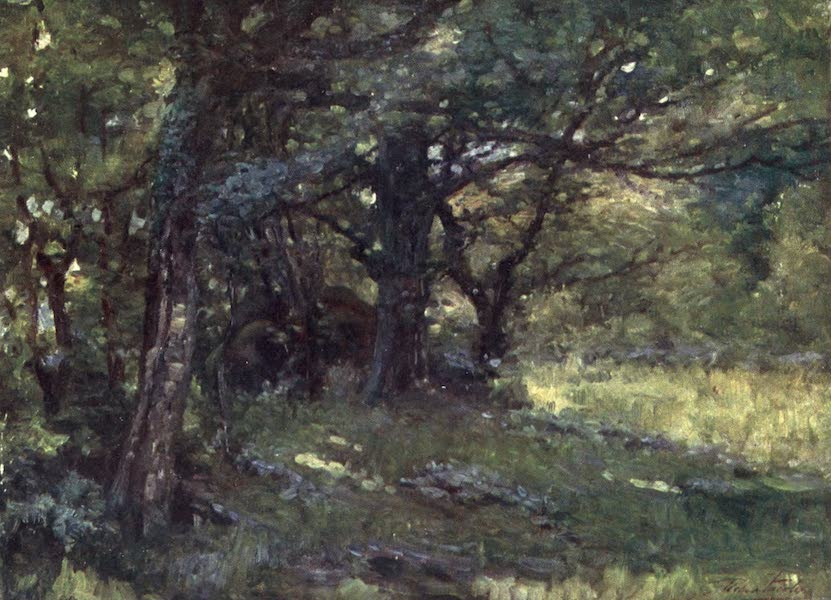 Beautiful Wales Painted and Described - In the Woods, Berwyn (1905)