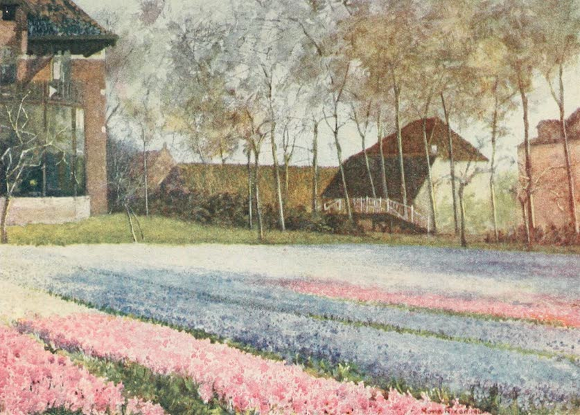 Belgium Past and Present - A Dutch Bulb Farm in Spring (1920)