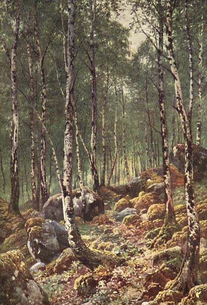 Bonnie Scotland Painted and Described - A Birch-Wood in Springtime, by Loch Maree, Ross-shire (1912)