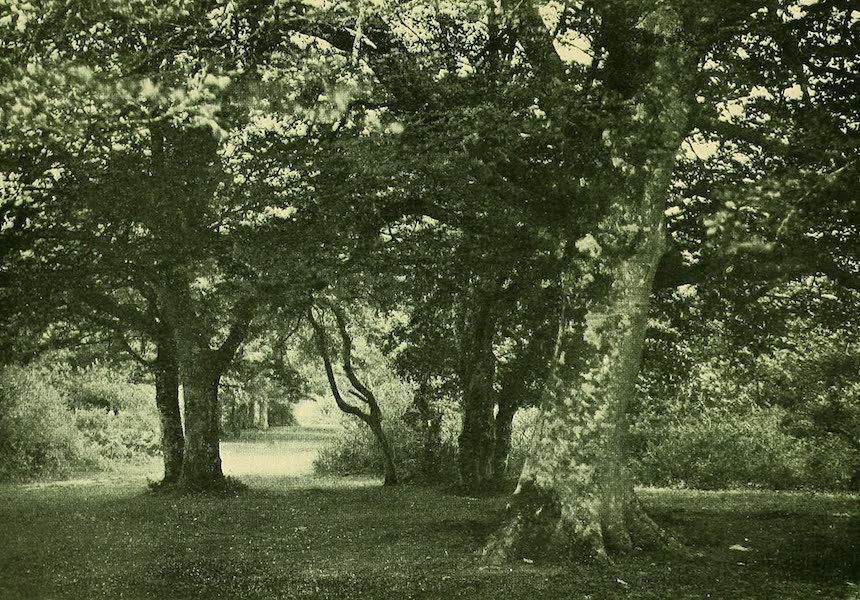British Highways And Byways From A Motor Car - A Glade in New Forest (1908)