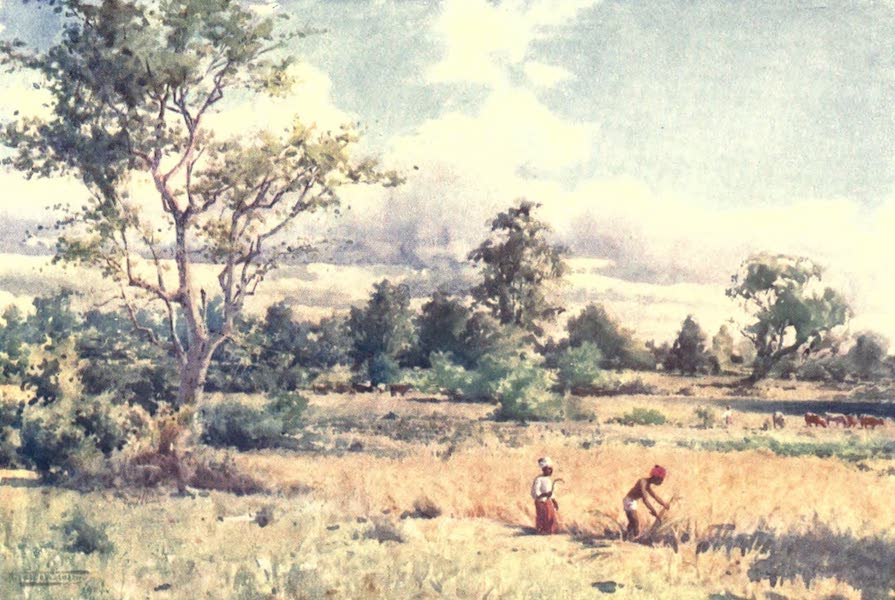Burma, Painted and Described - Scrub Jungle (1905)