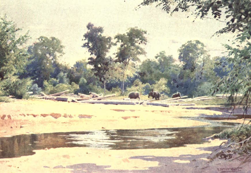 "Burma, Painted and Described - Elephants clearing a ""Pone"" of Logs at Kokogon (1905)"