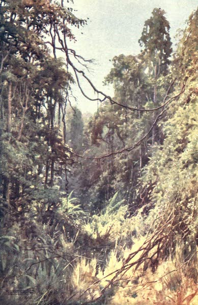 Burma, Painted and Described - A Forest Glade (1905)