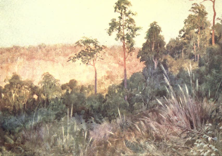 Burma, Painted and Described - Jungle on the Lashio Line (1905)