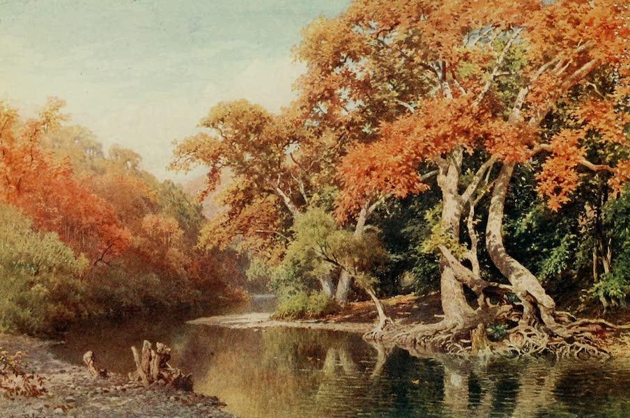 California : The Land of the Sun - Sycamores, a Coast Range Canon (1914)
