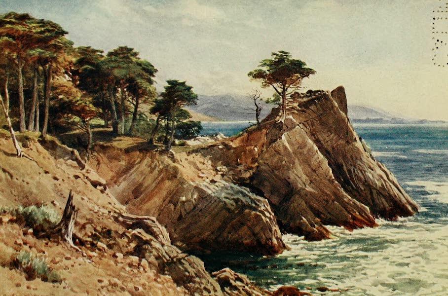 California : The Land of the Sun - Cypress Point, near Carmel (1914)