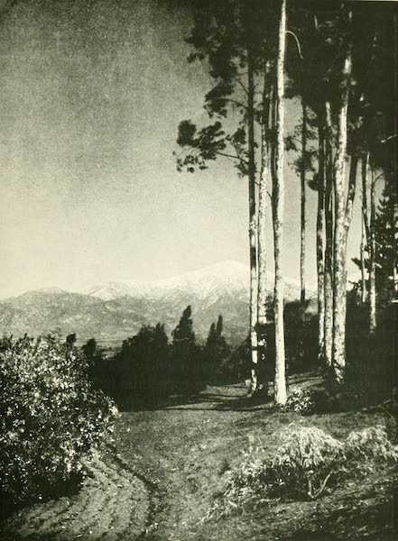 California the Wonderful - Sierra Madre from Redlands (1914)