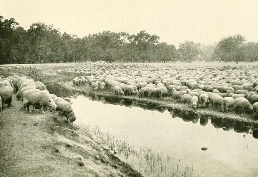 California the Wonderful - A sheep ranch in Tehama County (1914)