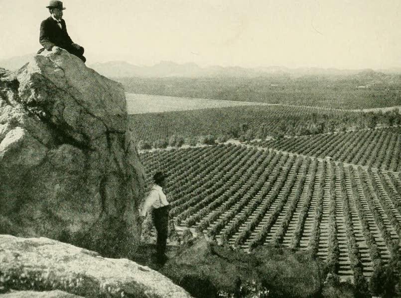 California the Wonderful - Orange groves at Riverside (1914)