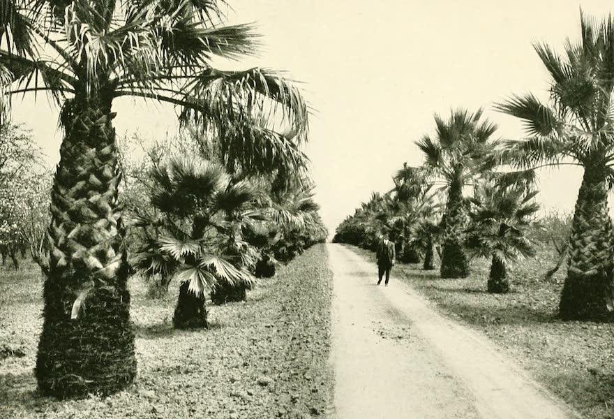 California the Wonderful - A palm drive in the Santa Clara Valley (1914)