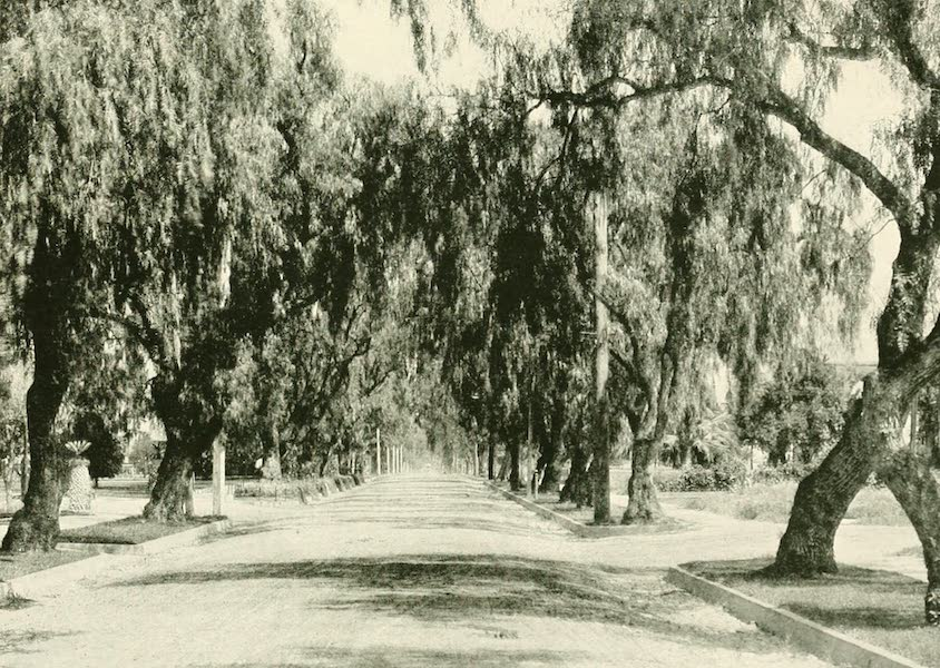 California the Wonderful - Morengo Ave., Pasadena (1914)