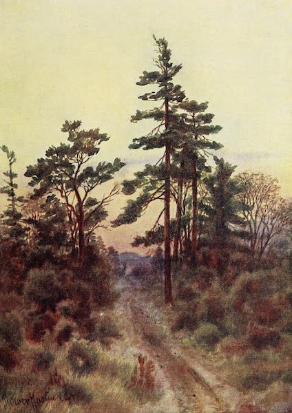 Canada, Painted and Described - Road near Victoria (Evening) (1907)