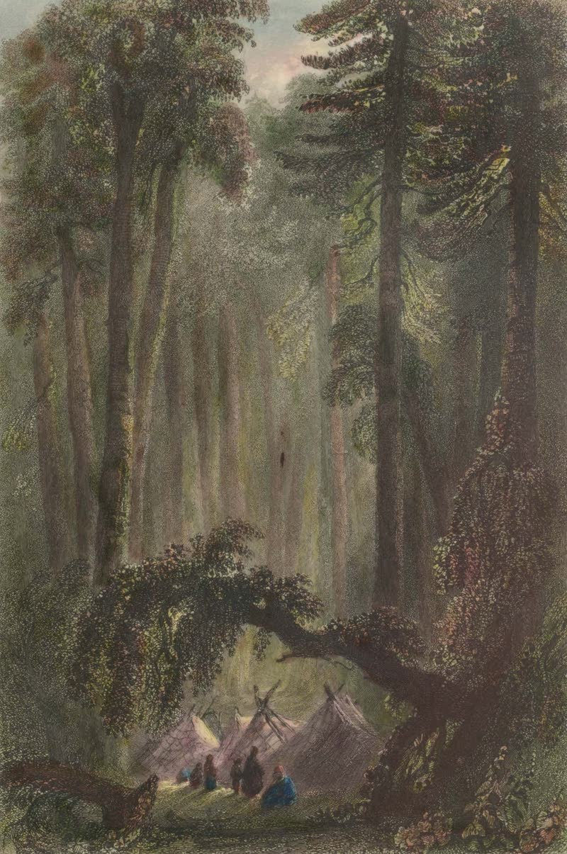 Canadian Scenery Illustrated: Volume 1 - A Forest Scene (1865)