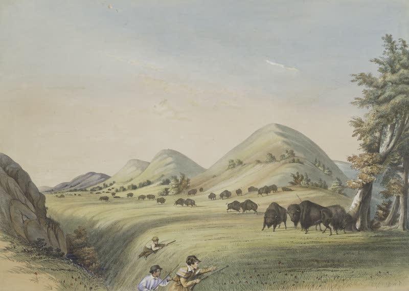 Catlin's Indian Portfolio - Buffalo Hunt Approaching in a Ravine (1844)