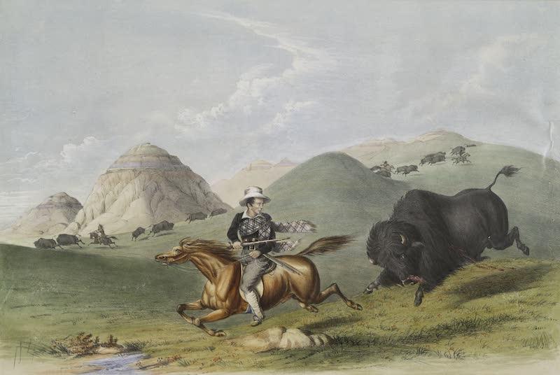 Catlin's Indian Portfolio - Buffalo Hunt Chasing Back (1844)