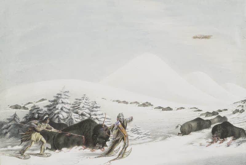 Catlin's Indian Portfolio - Buffalo Hunt on Snow Shoes (1844)
