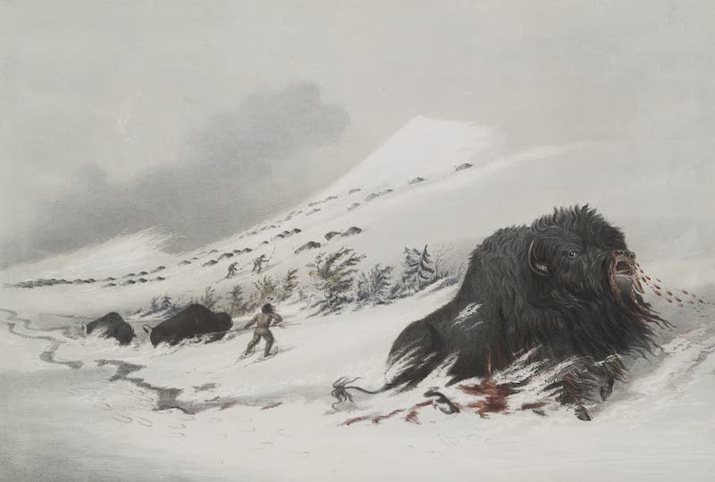 Catlin's Indian Portfolio - Dying Buffalo Bull in a Snow Drift (1844)