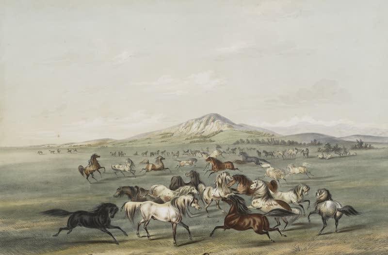 Catlin's Indian Portfolio - Wild Horses at Play (1844)