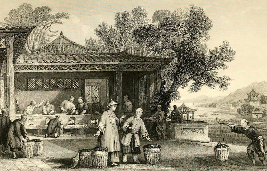 China in a Series of Views Vol. 1 - The Culture and Preparation of Tea (1843)