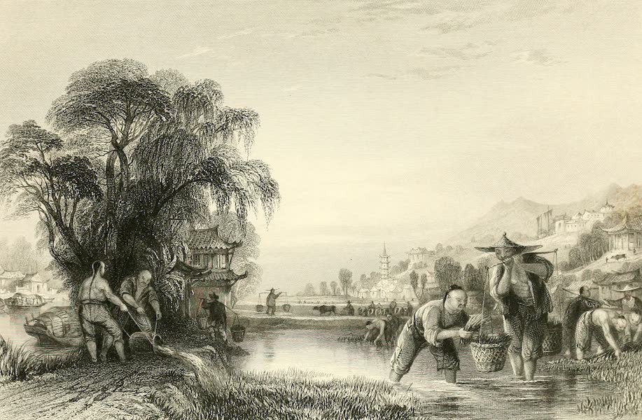 China in a Series of Views Vol. 3 - Transplanting Rice (1843)