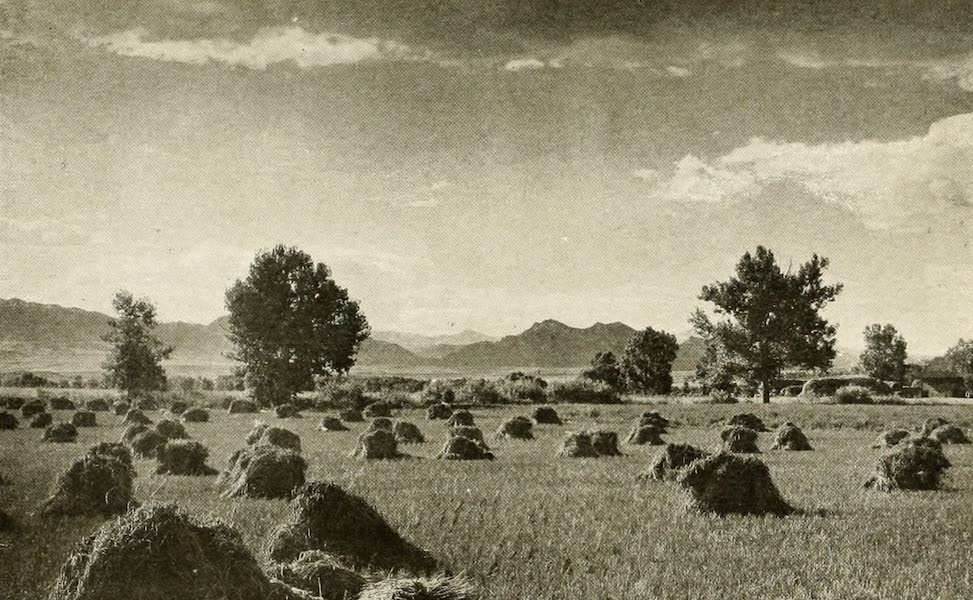 Colorado, The Queen Jewel of the Rockies - A Wheat Field, near the Foot Hills (1918)