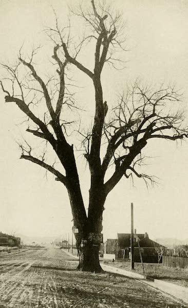 Colorado, The Queen Jewel of the Rockies - Hangman's Tree, Denver (1918)