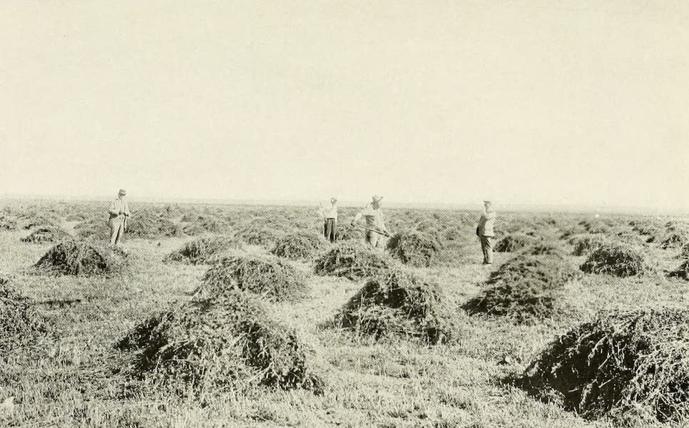 Colorado, The Queen Jewel of the Rockies - Alfalfa from Dry Farming (1918)