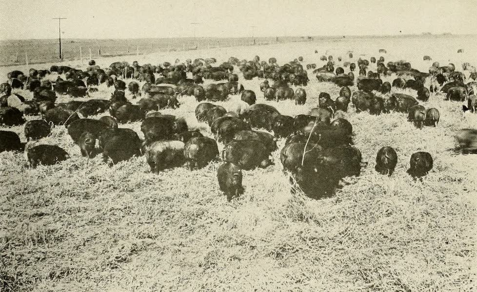 """Colorado, The Queen Jewel of the Rockies - """"Pigs, Peas and Alfalfa"""" (1918)"""