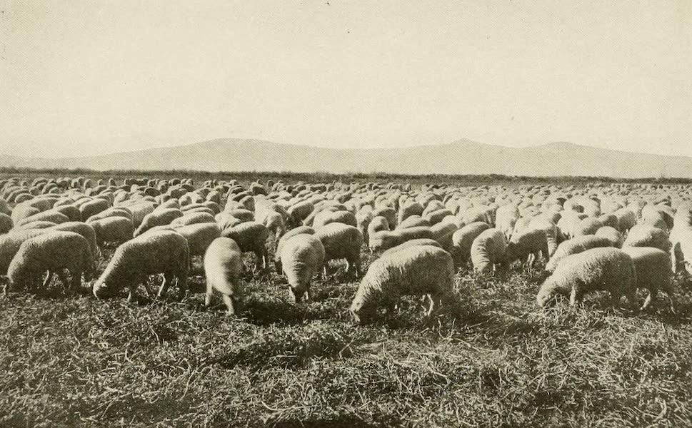 Colorado, The Queen Jewel of the Rockies - Durango Lambs (1918)