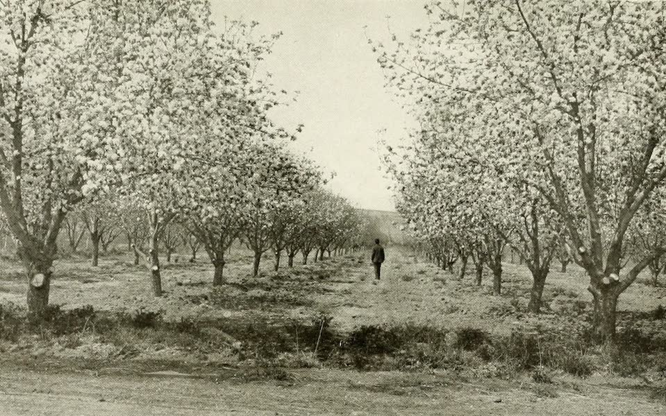 Colorado, The Queen Jewel of the Rockies - Blossom Time in Grand Valley (1918)