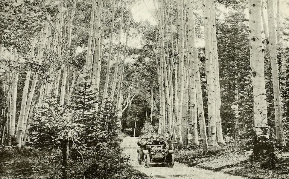 Colorado, The Queen Jewel of the Rockies - A Road through the quaking Aspens (1918)
