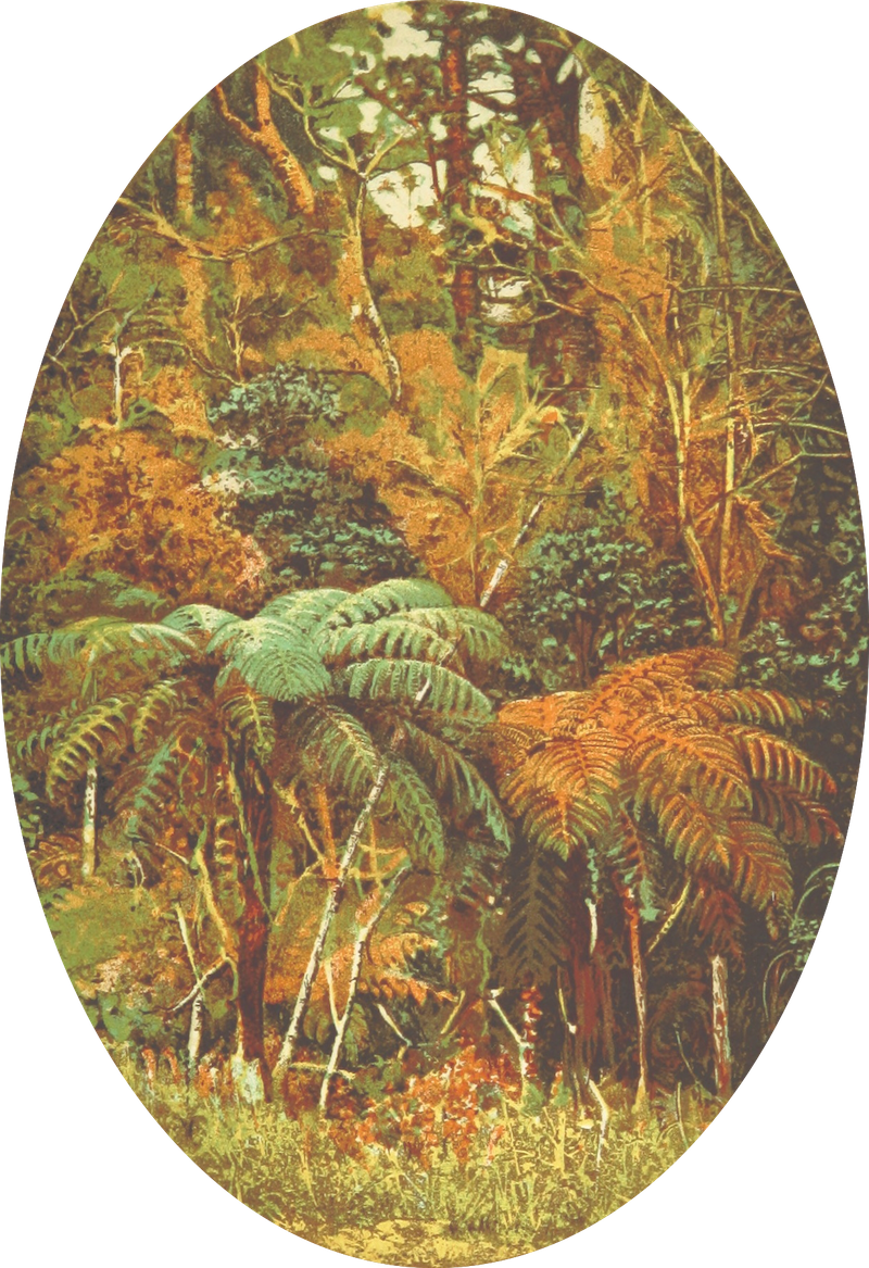 Cruise Round the World of the Flying Squadron - New Zealand Forest (1871)