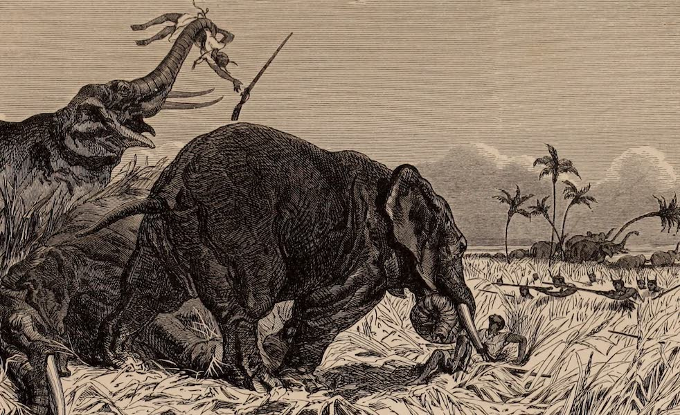 Dahomey As It Is - The Amazonian Elephant Hunters (1874)