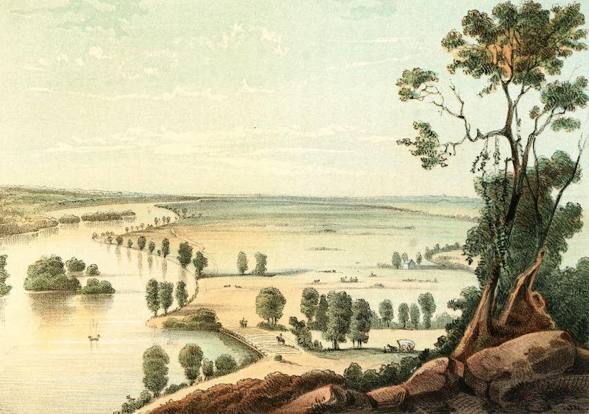 Das Illustrirte Mississippithal - Great Muscadine, Prairie, Iowa (1857)