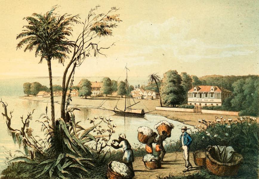 Das Illustrirte Mississippithal - Cotton Plantation (1857)