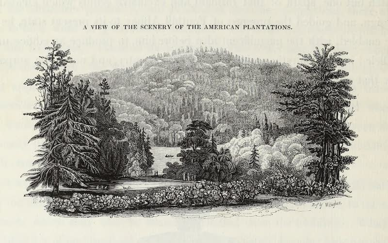 Delineations of Fonthill and its Abbey - A View of the Scenery of the American Plantations (1823)
