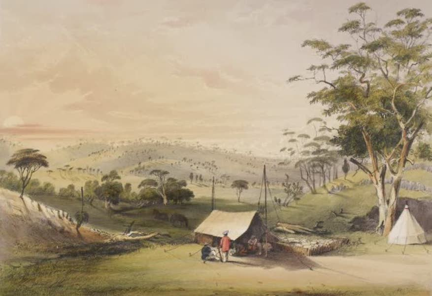 Description of the Barossa Range and its Neighbourhood in South Australia - Sheep Shearing in the Barossa (Sunset) (1849)
