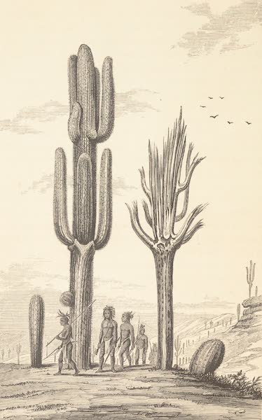 Journey from the Mississippi Vol. 1 - <i>Cereus giganteus</i> (1858)