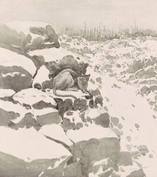Drawings by Frederic Remington - A Mountain Lion Hunting (1897)