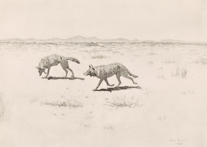 Drawings by Frederic Remington - Coyotes (1897)