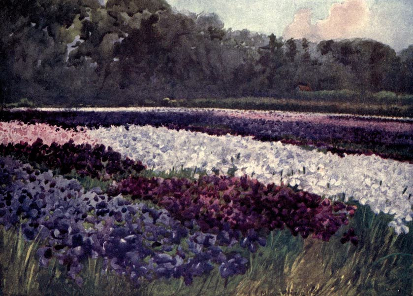 Dutch Bulbs and Gardens, Painted and Described - Hyacinths scattered on the Sand like sapphire, pearl, and rich embroidery (1909)