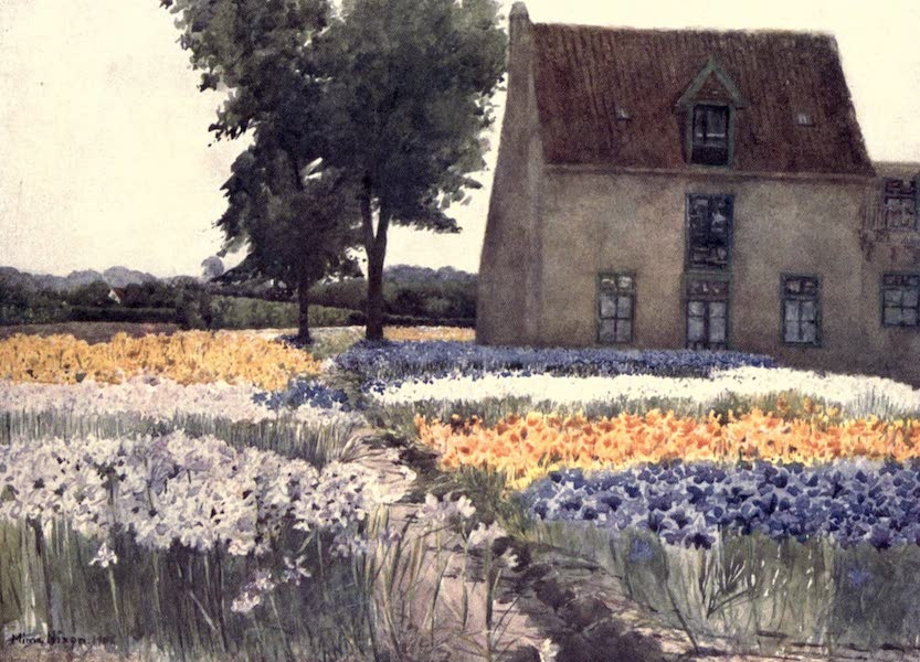 Dutch Bulbs and Gardens, Painted and Described - Spanish Irises (1909)