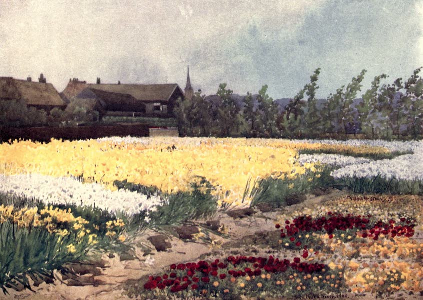 Dutch Bulbs and Gardens, Painted and Described - A Bulb Farm near Overveen (1909)